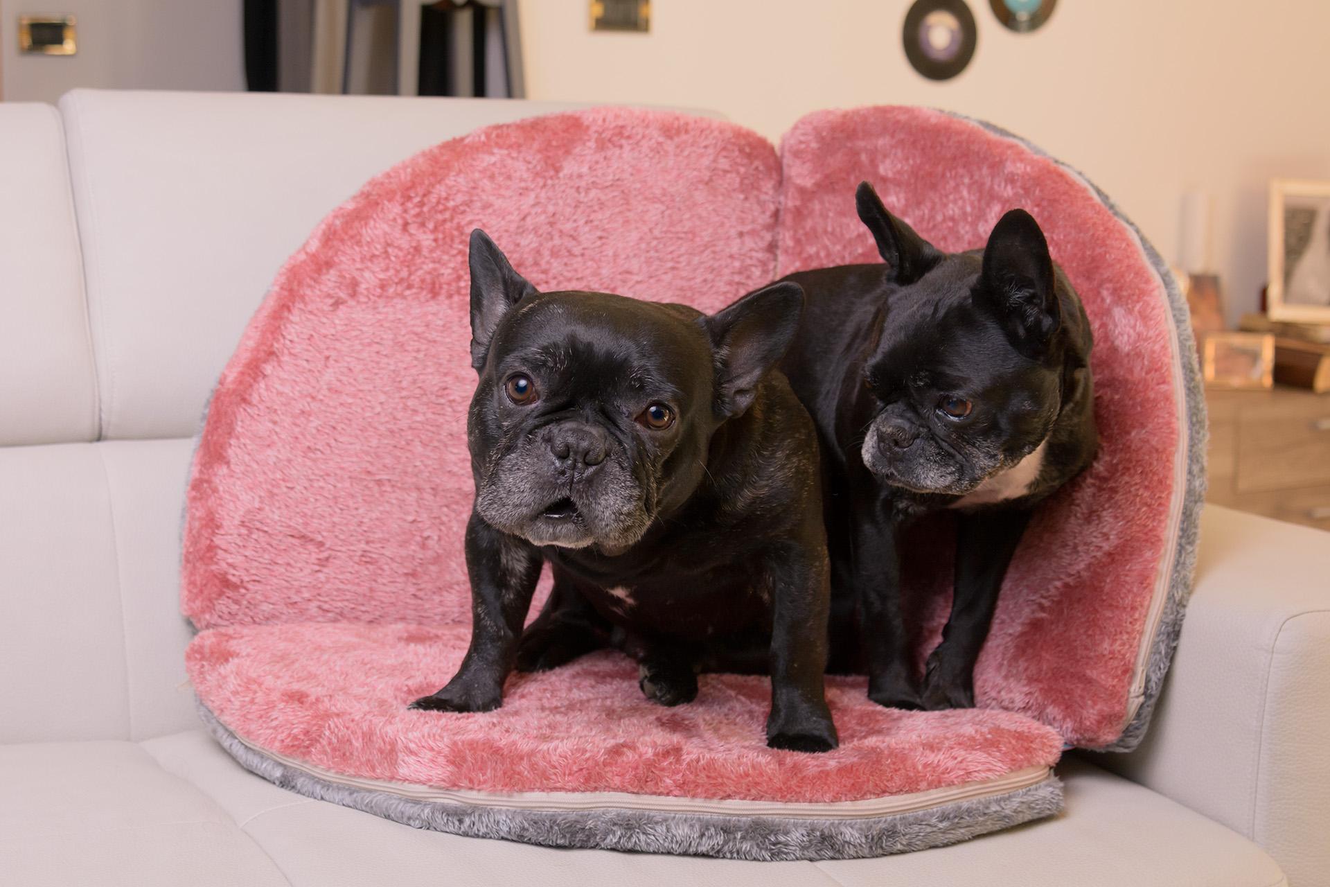 Cuscino dadivano per cani