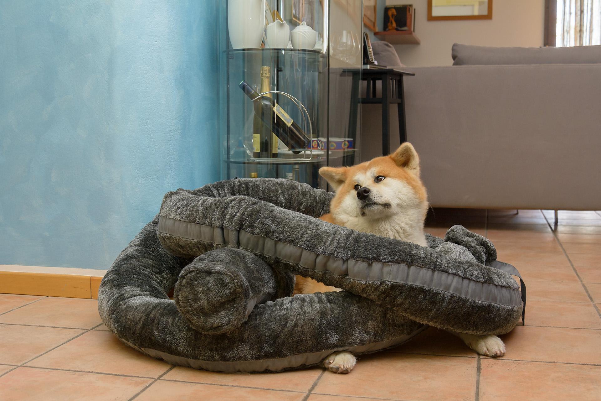 Cuscino personalizzabile per cani e gatti