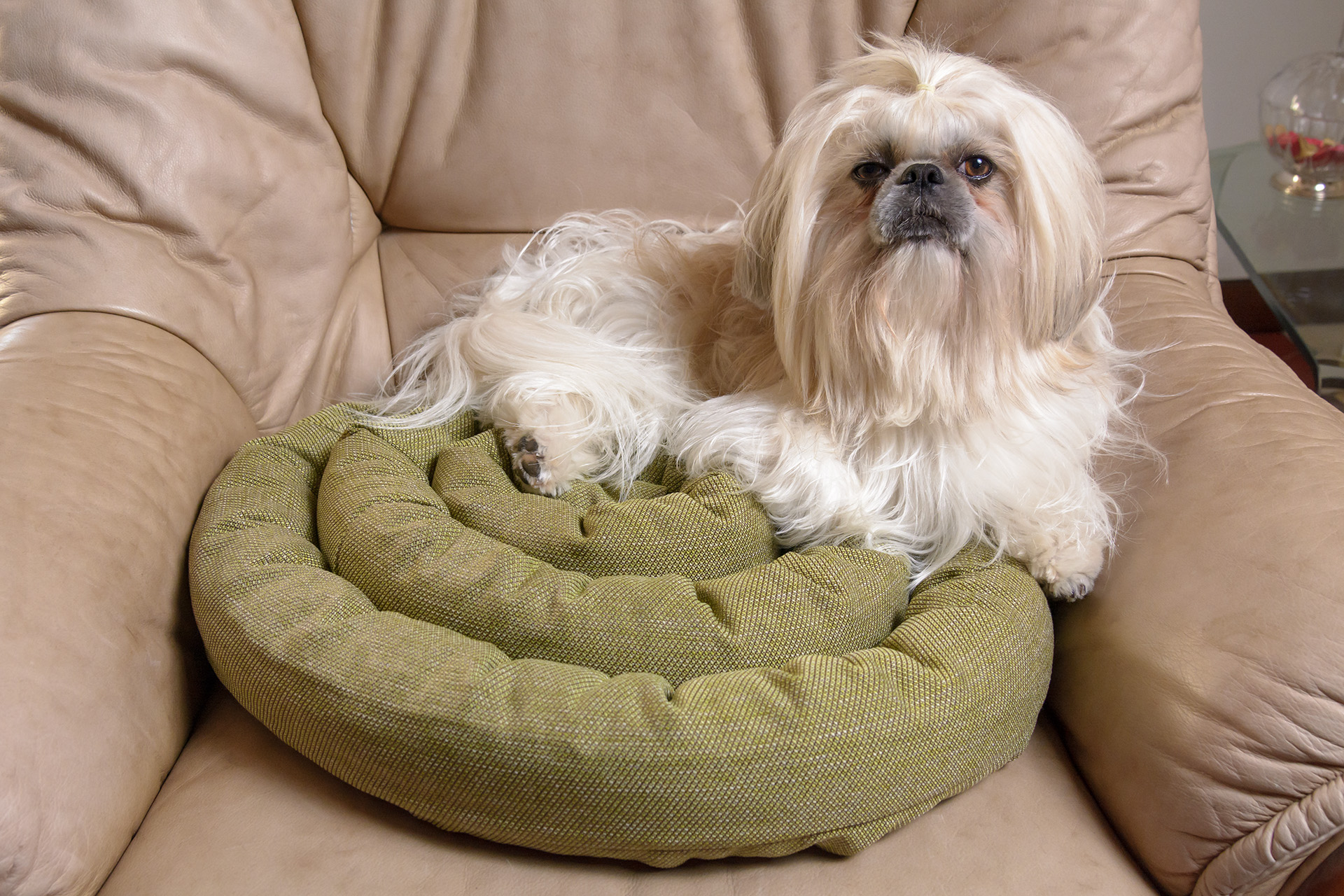 Cuscino in cotone per cani e gatti