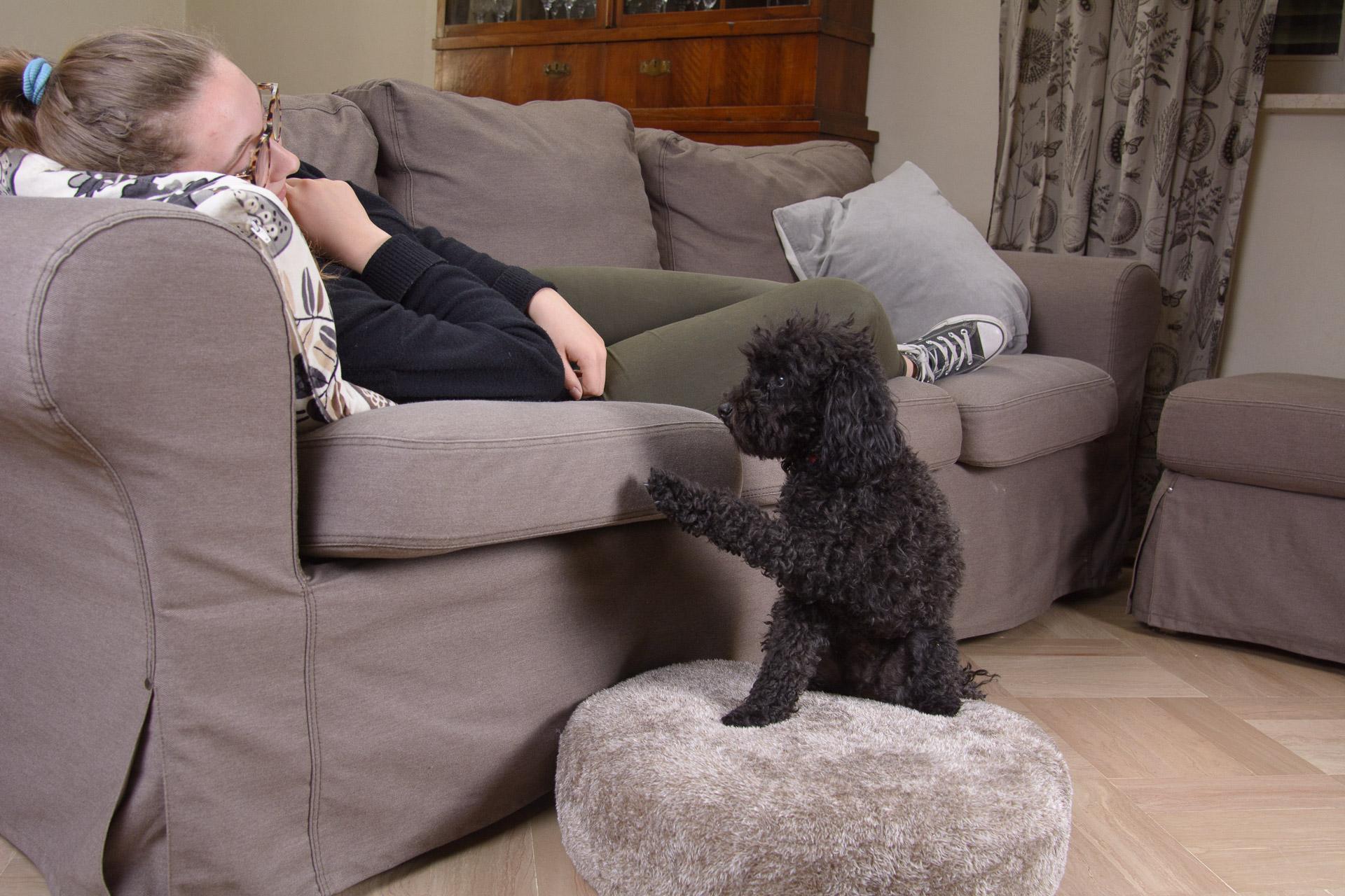 Cuscino lavabile per cani
