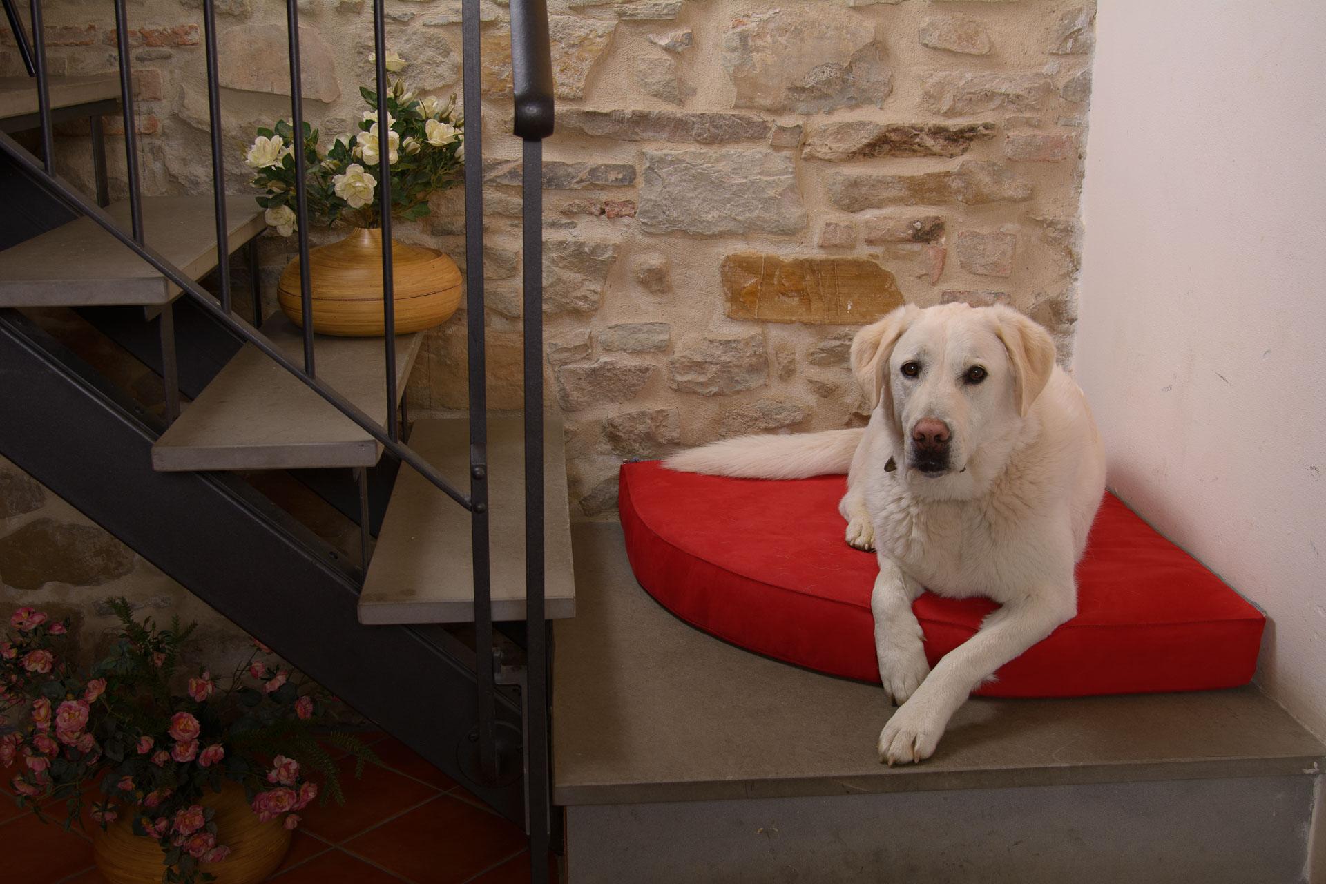 Cuscino morbido per cani