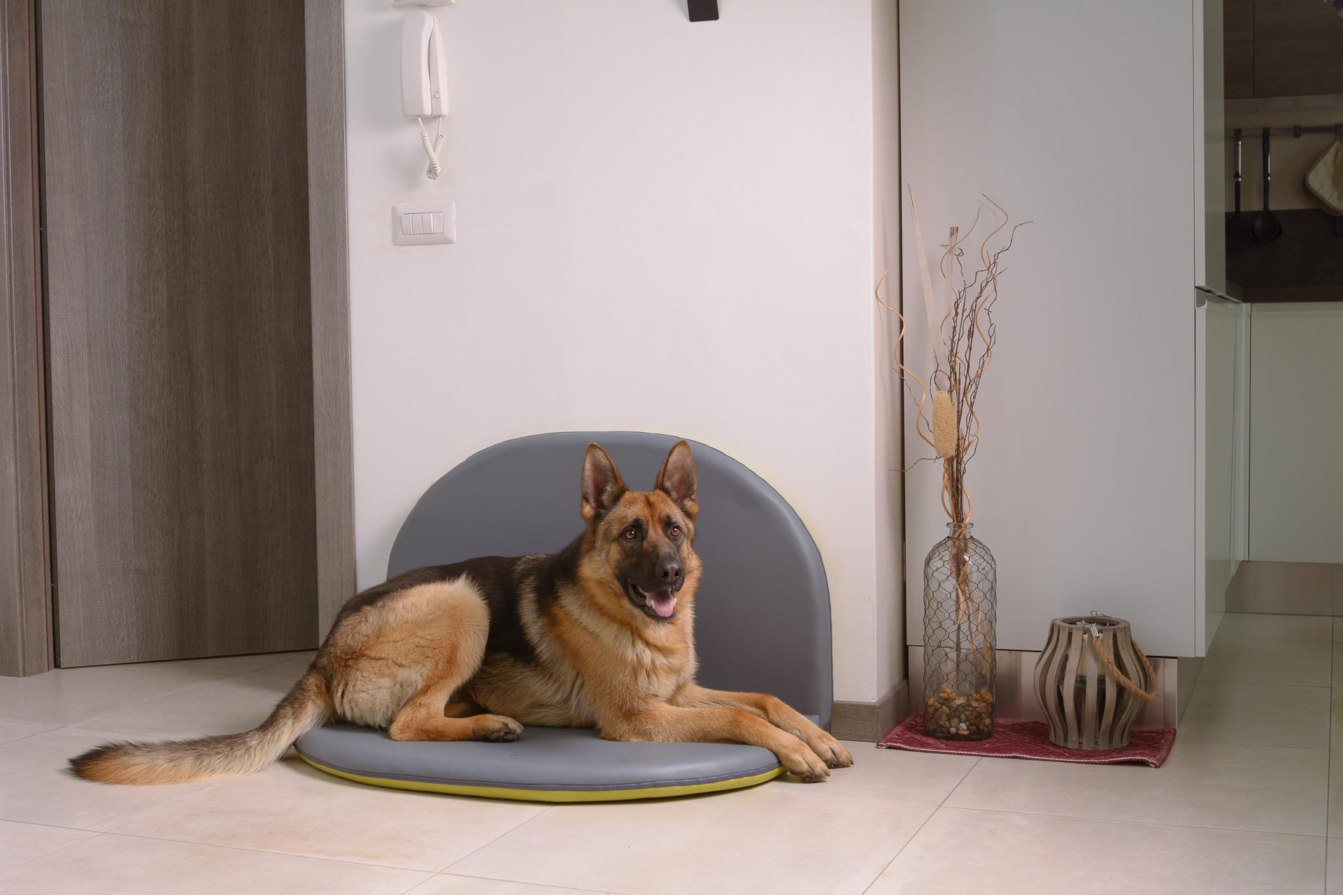 Cuscino taglie su misura per cani